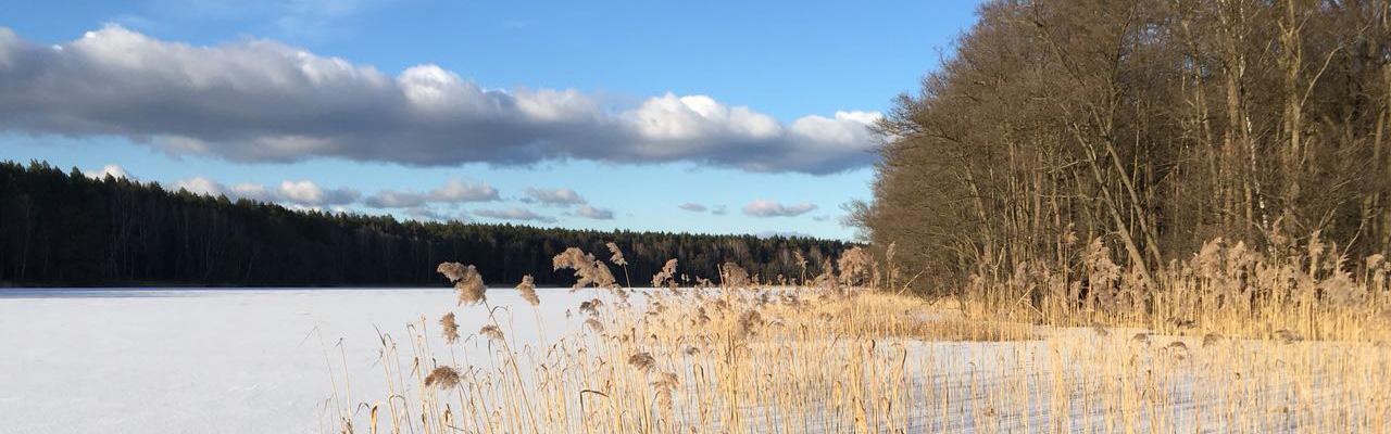 katrin-rahnefeld-coaching-schreibberatung-landschaft-sand-graeser-im-wind-wald-wolkenhimmel_400